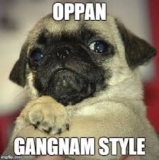 Funny Pug Memes - funny pug memes imgflip