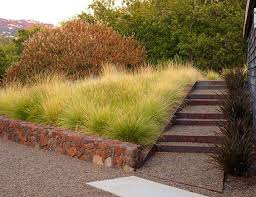 311 best ornamental grasses images on ornamental