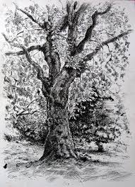 pen and ink tree drawings pen and ink drawing of a tree in