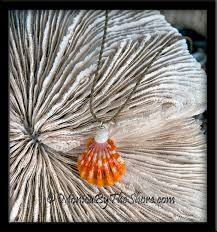 orange hawaiian sunrise shell u0026 puka shells