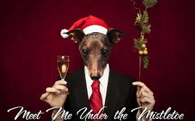 funny christmas card ideas with dogs u2013 happy holidays