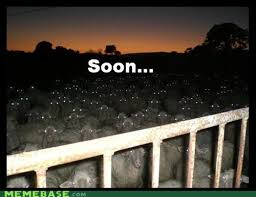 Soon Meme - soon meme 28 images soon know your meme amazing animals