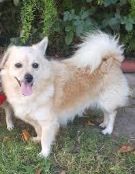 much love animal rescue adopt adopt adopt