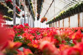 variety growers neptune nj 07753 garden centers in nj flower shops in nj flower distributors nj flower shop nj begonias 4 copy copy1 jpg