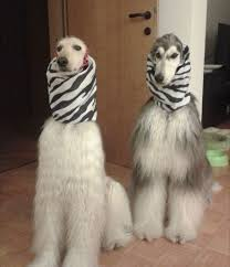 afghan hound judith light 186 best images about like fulanita on pinterest