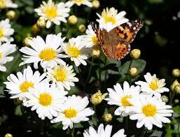 Weather Channel Radar San Antonio Texas Massive Wave Of Butterflies Lights Up Denver Weather Radar San