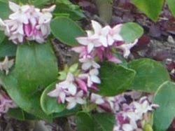 expert guides to ornamental trees and shrubs
