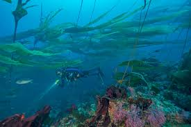 California snorkeling images Diving and snorkeling channel islands national park u s jpg