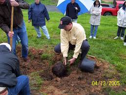 Transplant Fruit Trees - what is the best time to plant or transplant trees and shrubs