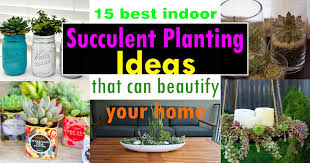 Wacky Garden Ideas 15 Best Indoor Succulent Planting Ideas That Can Beautify Your