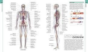 Human Body Anatomy Pics Human Anatomy Dk 0790778019549 Amazon Com Books