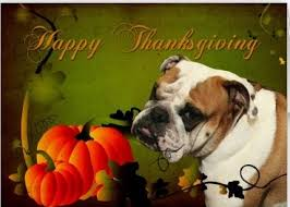 bulldog thanksgiving pictures festival collections