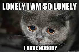 Sad Animal Memes - animal memes that perfectly describe your sad single life cuteness