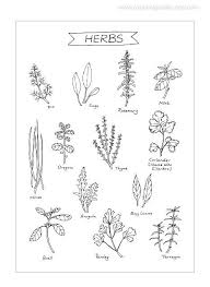 herbs kitchen art 8x11 ink illustration culinary art print