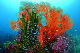 marine scientists quantify life under the sea magazine articles