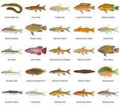types of fish aquarium 3 common tropical aquarium fish