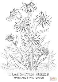 free printable state flower coloring pages the best flowers ideas