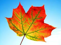 free photo leaf fall frame texture free image on pixabay