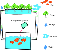 simple backyard aquaponics how to set up a garden fish tank my