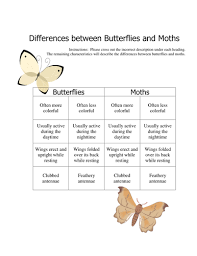 difference between butterflies and moths worksheet by lbearss