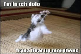 Morpheus Cat Meme - i m in teh dojo cat meme cat planet cat planet