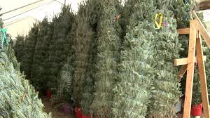 christmas time in texas silo christmas tree farm youtube
