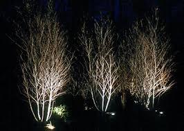 Landscape Lighting Ideas Trees Landscape Tree Lighting Outdoor Goods