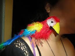 parrot pal how to make a parrot plushie papier mâché and
