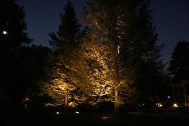 Landscape Lighting Trees Artistic Landscapes Evergreen Trees With Landscape