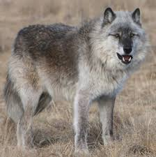 Colorado wild animals images The wild animal sanctuary jpg