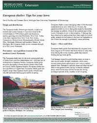 european chafer tips for your lawn msu extension