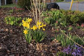Scottish Rock Garden Forum by April 2017 Sorta Like Suburbia