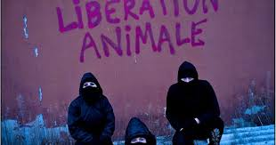 american pitbull terrier juen animal liberation front worldwide new and info about a l f