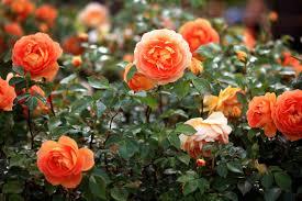 flower garden games online gardening tips your garden center won u0027t share reader u0027s digest