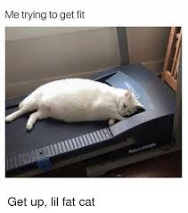 Fat Cat Meme - me trying to get fit get up lil fat cat meme on me me