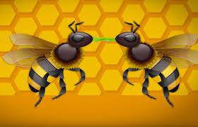 how do bees make honey keeping backyard bees