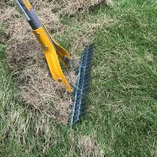how to dethatch your lawn lawn care maintenance canopy