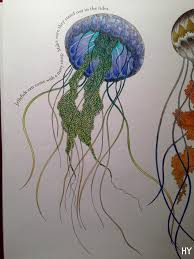 coloured in the jelly fish from the animal kingdom colouring book