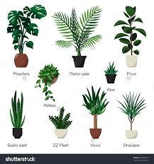 vector isolated set various indoor ornamental stock vector