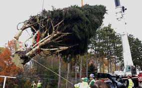 it s goin a state college spruce tree is headed to new