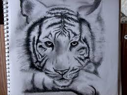 white siberian tiger by alexapangilinan on deviantart