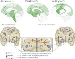 the cell biology of prion like spread of protein aggregates