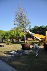 native plantings campus tree canopy ucf lnr