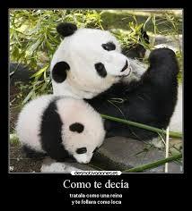 imágenes y carteles de pandas pag 5 desmotivaciones