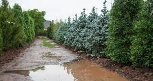 B B Landscaping by Rain Trains And Automobiles Widespread Flooding Affects