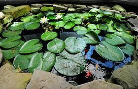 Backyard Botanical Complete Gardening System Towering Tribute Scott Twp Couple Recreate Popular Botanical