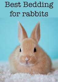 Best Bedding For Rats Best Bedding For Rabbits Helping You To Make The Right Choice
