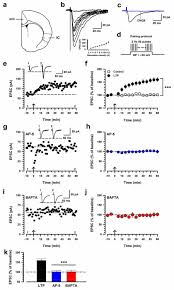 calcium stimulated adenylyl cyclase subtype 1 ac1 contributes to