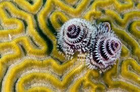 the ocean u0027s weirdest creatures national geographic kids