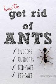 Tiny Black Flies In The House by Best 20 Flying Ants In House Ideas On Pinterest Small Flies In